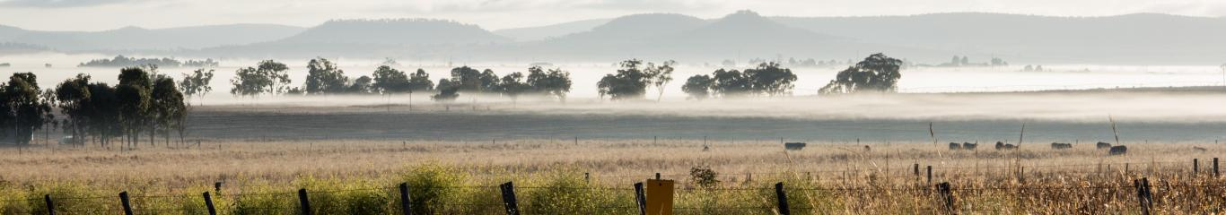 Darling downs misty cows in the distance
